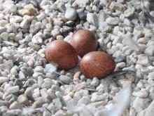 nestcontrole 31 maart 2017