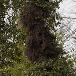 nest bij Kinderboerderij Laag Buurlo, april 2004
