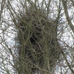 nest op een schoolplen aan de Homerusstraat, januari 2010
